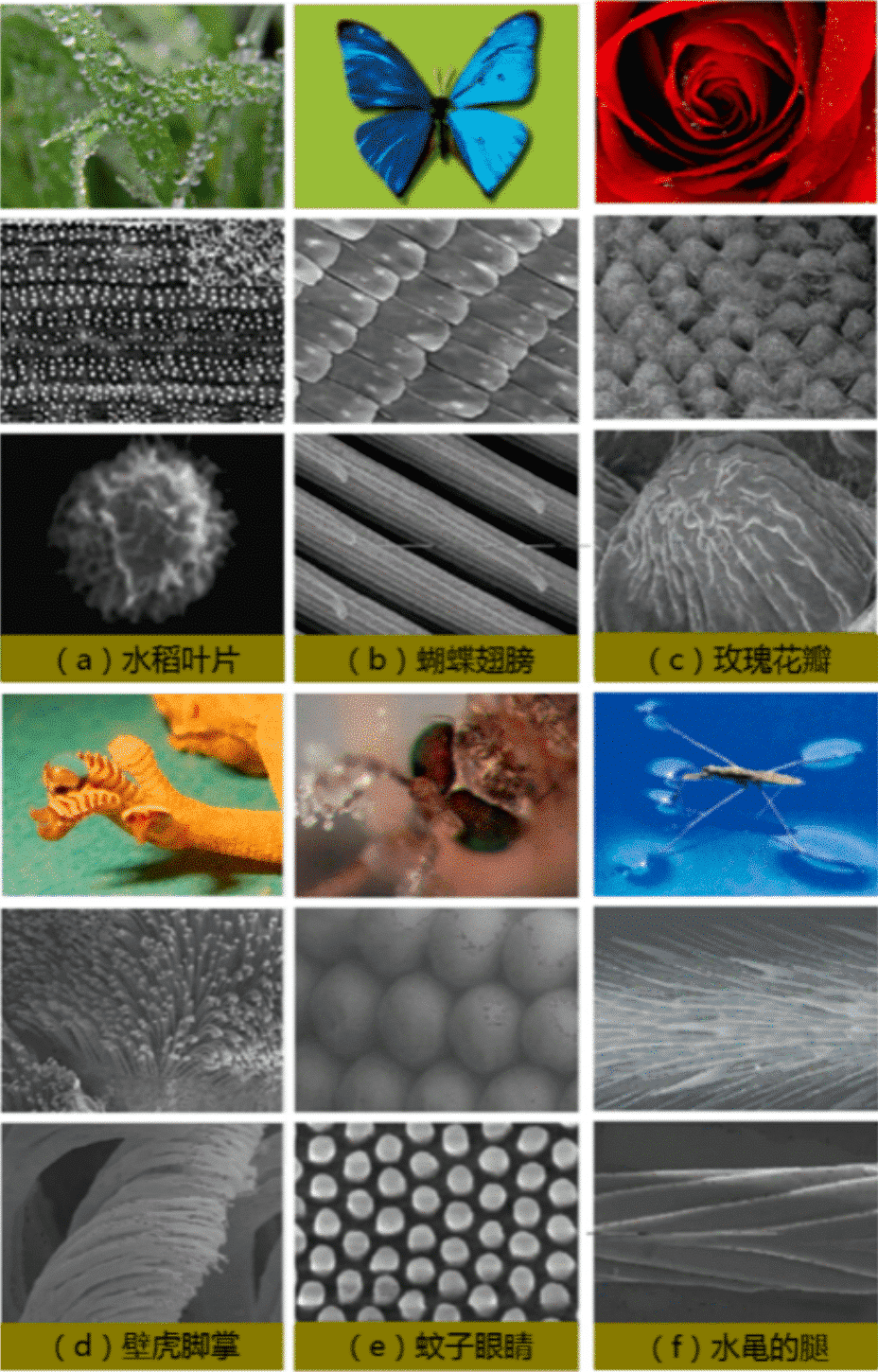From nature to bionics: the past and present of superhydrophobic materials 2