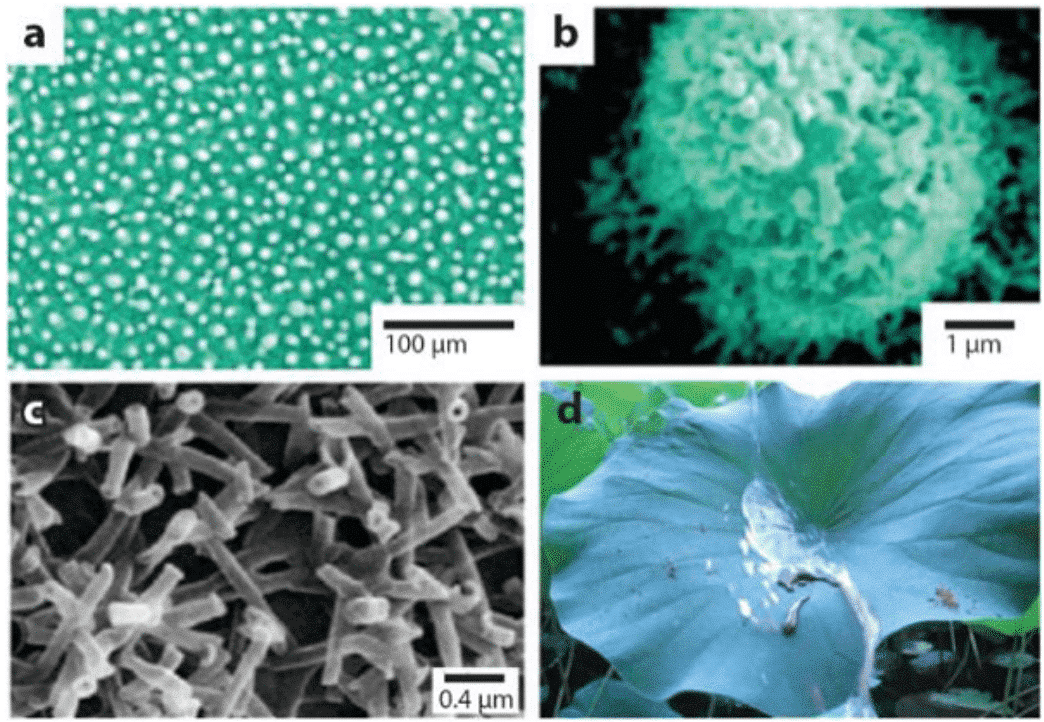 From nature to bionics: the past and present of superhydrophobic materials 1