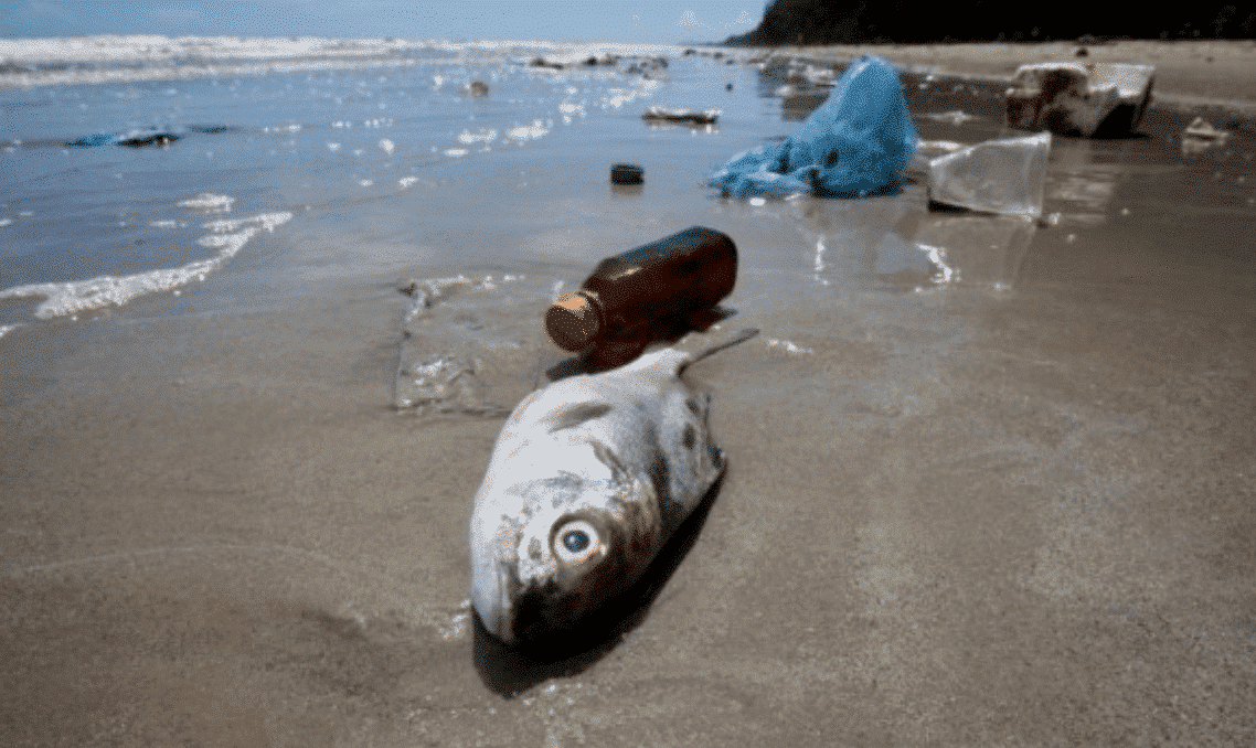 "Micro-plastic, the ""invisible killer"" that harms the global environment 4"